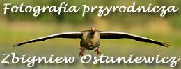 Fotografia przyrodnicza - Zbigniew Ostaniewicz